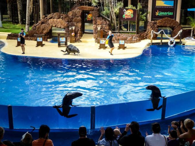 Zoo Fuertaventura pokaz