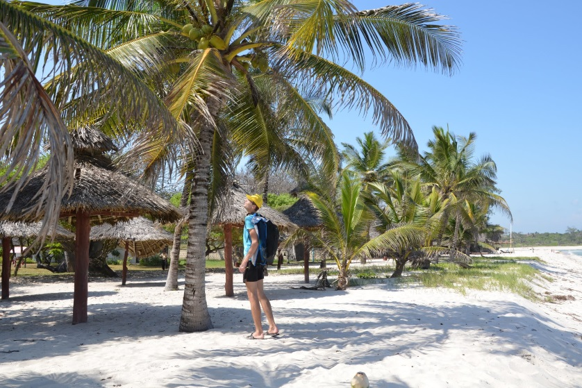 Palmy plaża Kenia