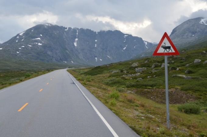 Znak uwaga renifery Norwegia