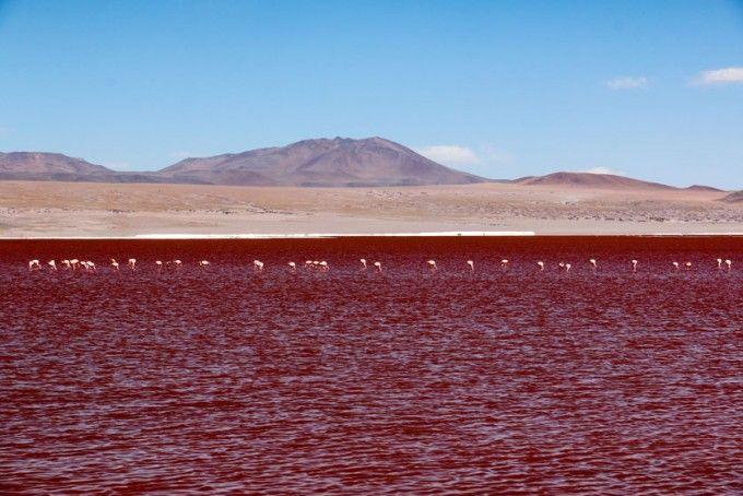 Laguna Colorada wycieczka Salar de Uyuni Boliwia