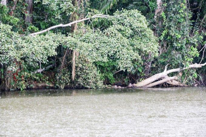 Nutrie jezioro Sandoval Peru
