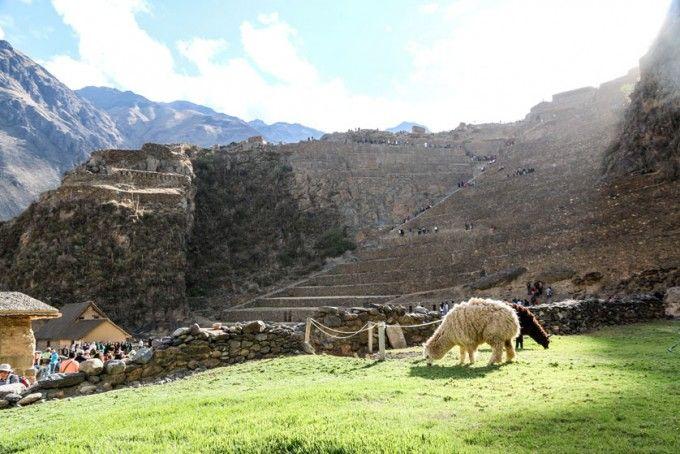 Twierdza Ollantaytambo 2 Peru