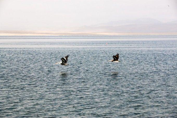 Zatoka Paracas Peru