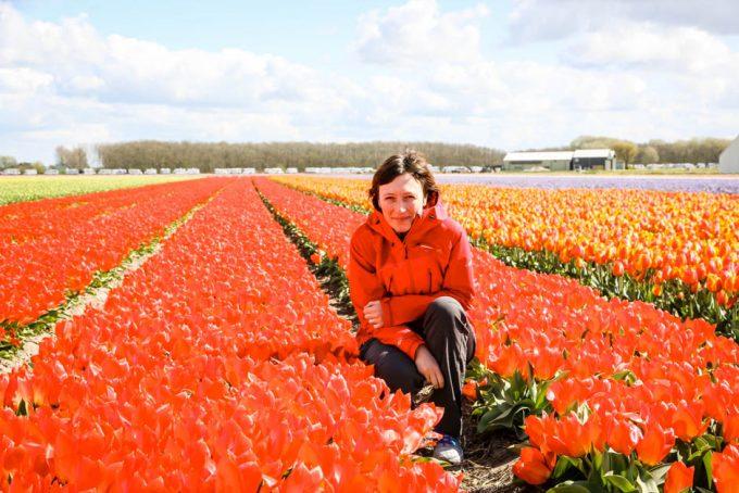 Tulipany Amsterdam Holandia