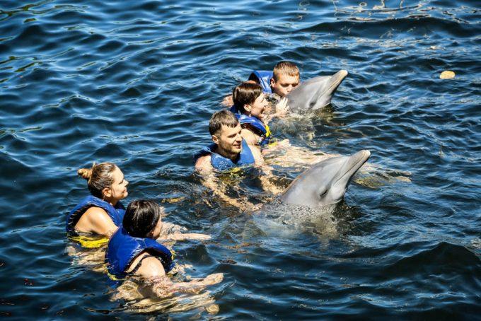 Delfiny Cienfuegos Kuba 2