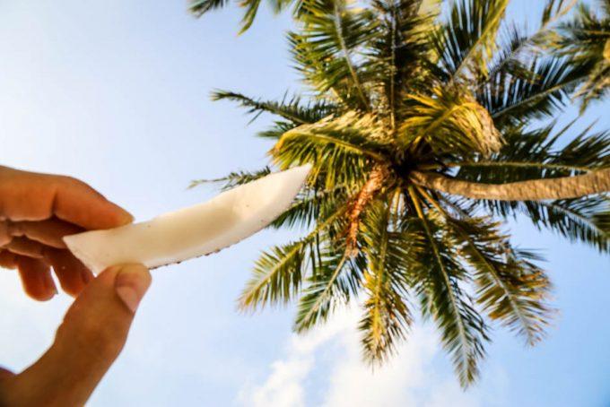 Maafushi Malediwy kokosy 3