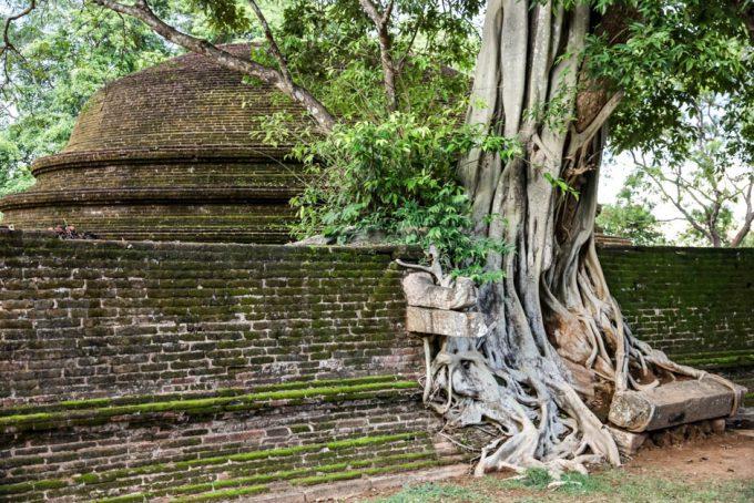 Polonnaruwa Sri Lanka 5