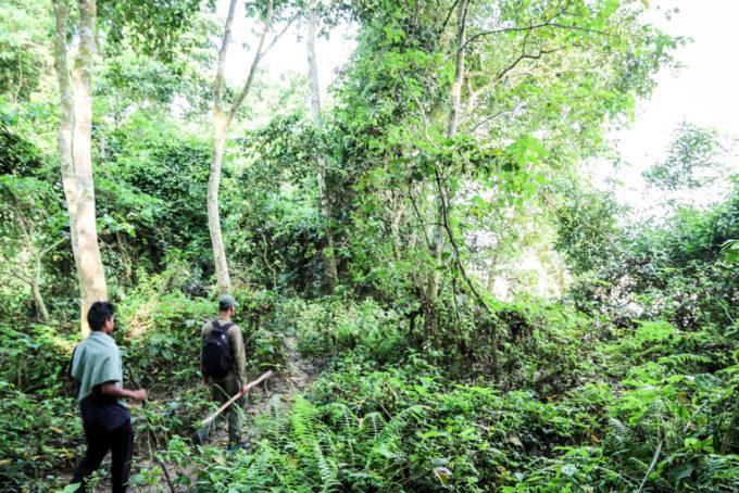 Nepal Chitwan safari jungle walk