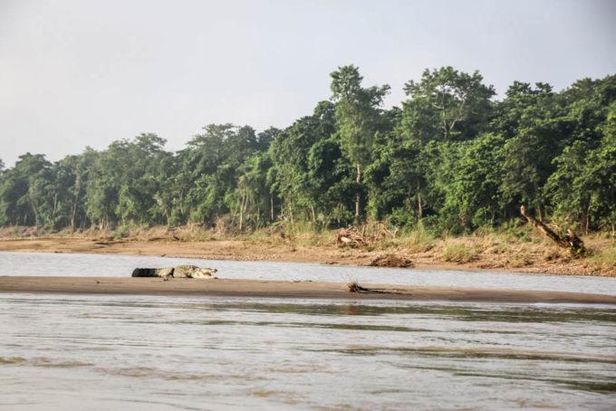 Nepal Chitwan safari krokodyle