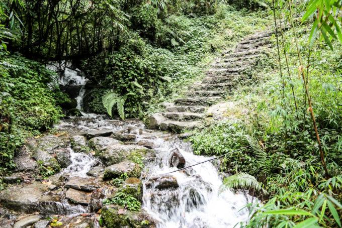 Nepal trekking do ABC las bambusowy