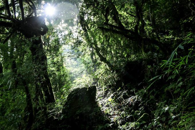 Nepal trekking do ABC las deszczowy 3