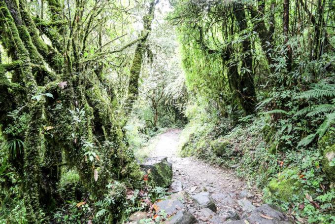 Nepal trekking do ABC las deszczowy