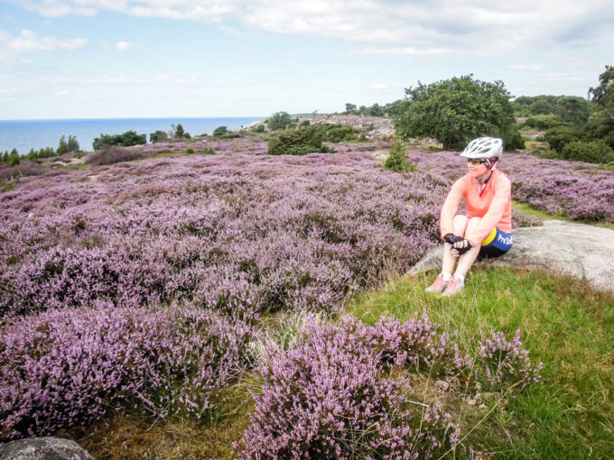 Bornholm pola wrzosowe