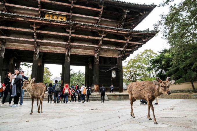 Brama Nara jelonki