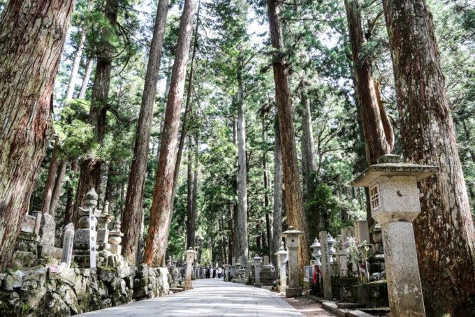 Cmentarz Okunoin Koyasan cedry