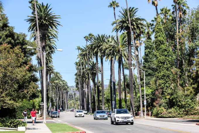 Beverly Hills palmy
