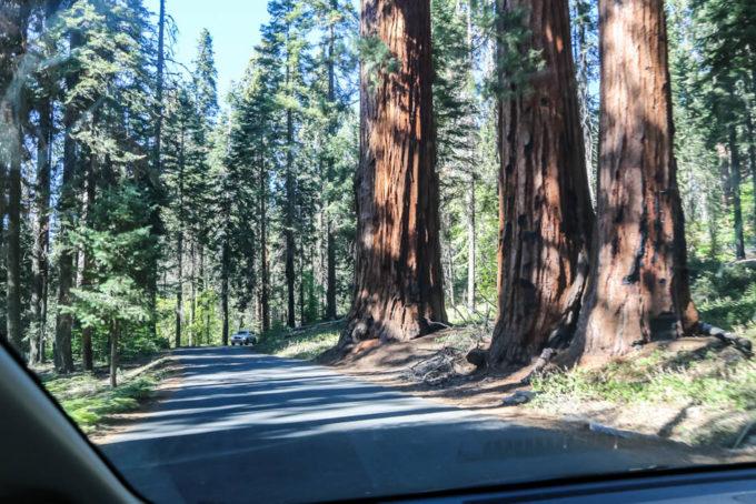 Sequoia National Park drzewa przy drodze