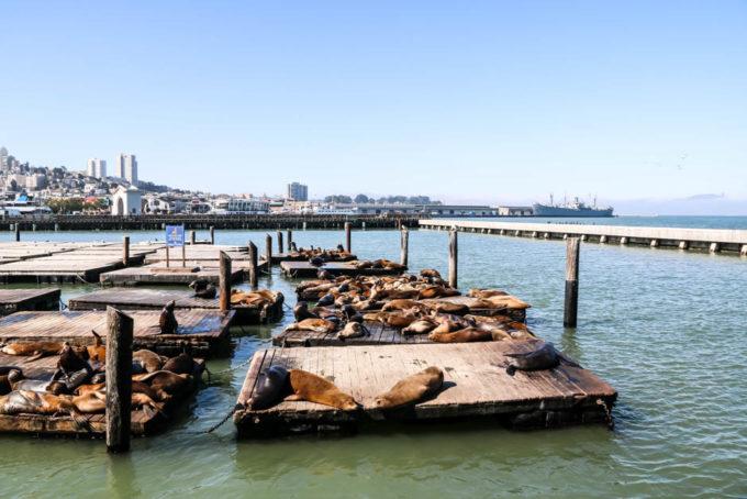 lwy morskie Pier 39