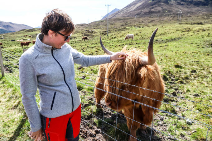 Highland Cow Skye