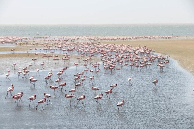 Flamingi w Walvis Bay