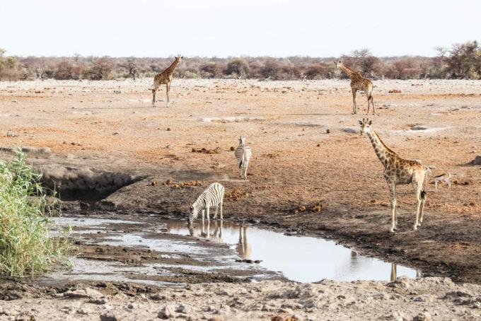Safari w PN Etosha Namibia