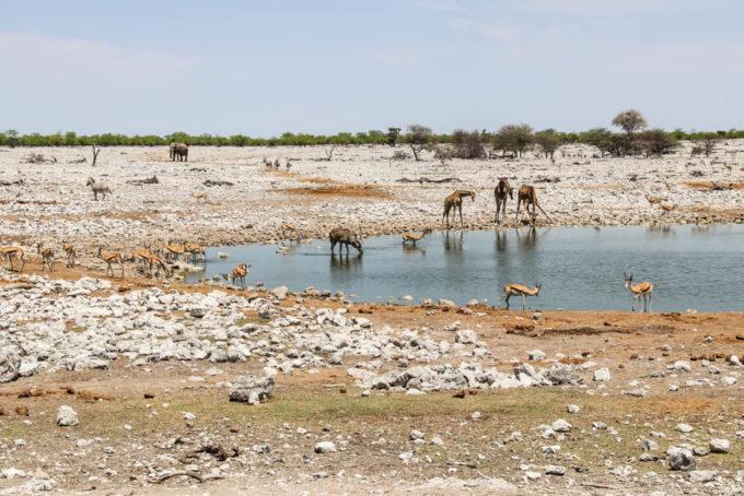 Safari w PN Etosha oczko w Okaukejo 2