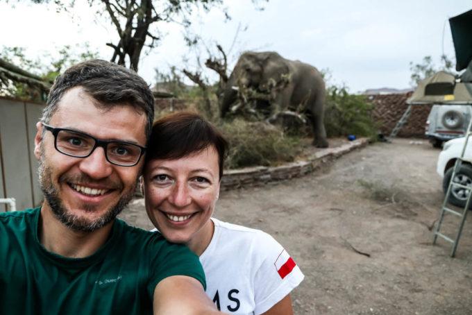 Słoń na kempingu w Palmwag rano