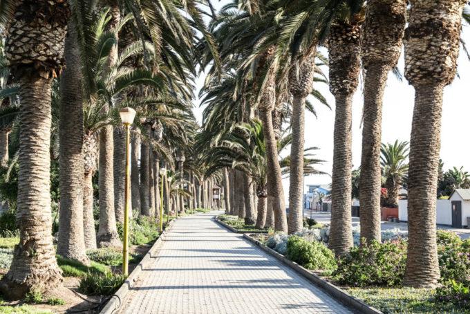 Swakopmund palmy